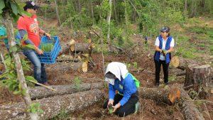 reforestacion-2
