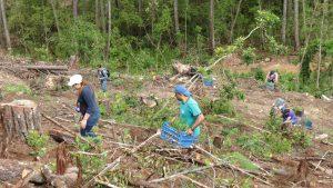 reforestacion-3